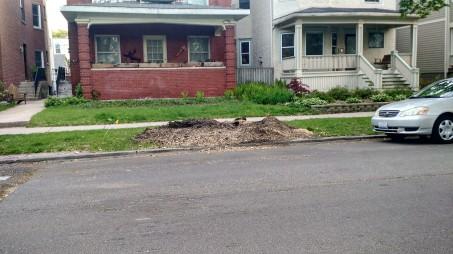 Ground Up Stump 2