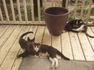 Family time-Louise, Moxi, Kiki, Onyx
