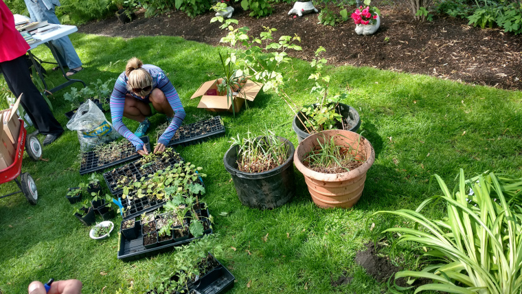 Around the Hood: You Are Invited to The Edgewater Glen Fall Plant SwapTomorrow